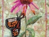 coneflower-and-the-monarch